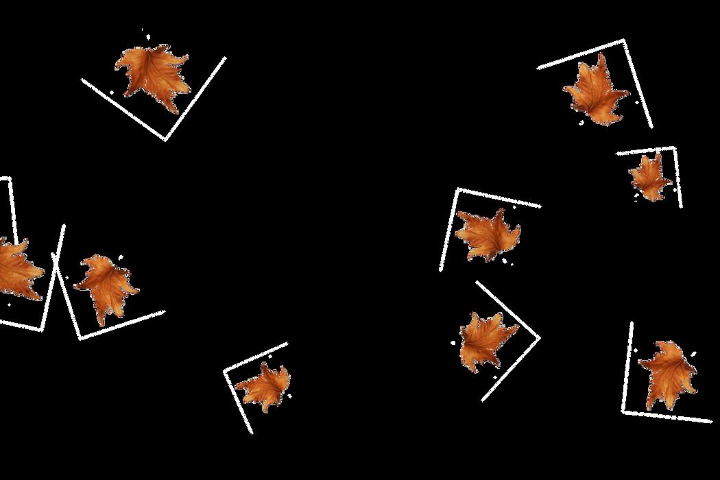 Falling leaves Photo Overlay   Wonderful autumn leaves transparent background