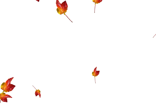 Gorgeous autumn leaves transparent background | Falling leaves Overlays for Photoshop