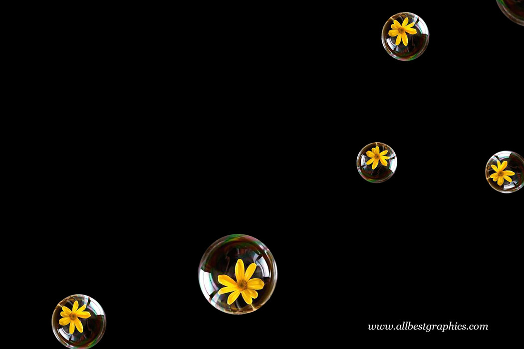 Lovely colorful soap bubble on black background | Bubble Overlays for Photoshop