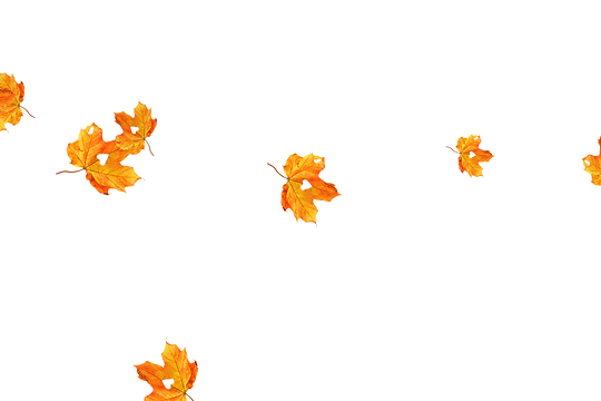 Gorgeous autumn leaves transparent background | Falling leaves Photo Overlay
