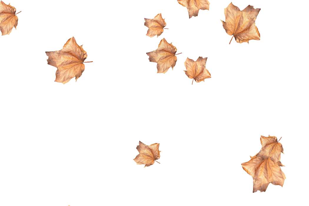 Unbelievable autumn leaves transparent background | Falling leaves Photo Overlay