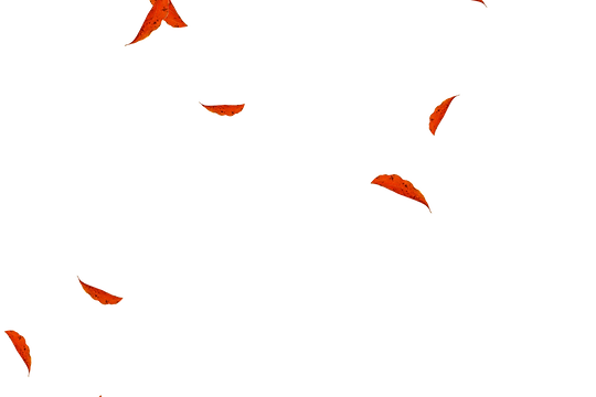 Wondrous autumn leaves transparent background | Falling leaves Overlays for Photoshop