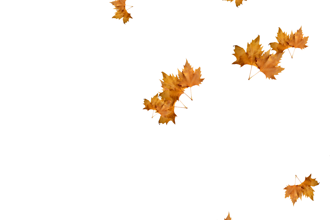 Unbelievable autumn leaves transparent background | Falling leaves Overlays for Photoshop
