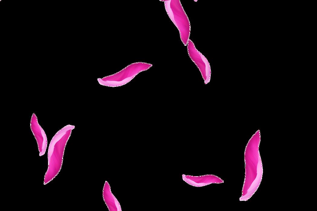 Beautiful Chinese Rose Petals | Photoshop Overlay | Freebies