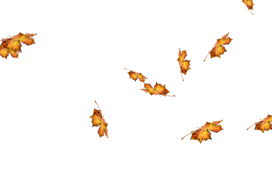 Romantic autumn leaves transparent background   Falling leaves Photo Overlays