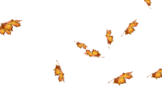 Romantic autumn leaves transparent background | Falling leaves Photo Overlays