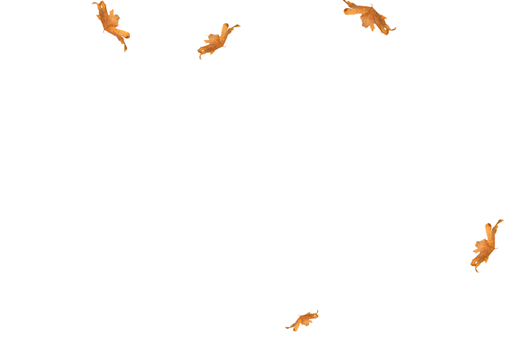 Unbelievable autumn leaves transparent background | Falling leaves Photoshop Overlay