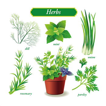 Herbs & vegetables | Food clipart free download -size 2400x2400 300ppi
