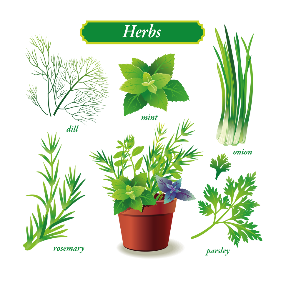 Herbs & vegetables   Food clipart free download -size 2400x2400 300ppi