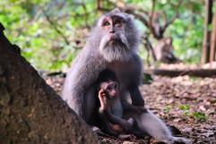Monkey&Child.jpg