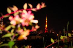 TokyoTowerFlowers.jpg
