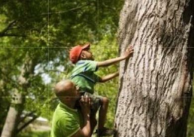 fatherandson_treepic