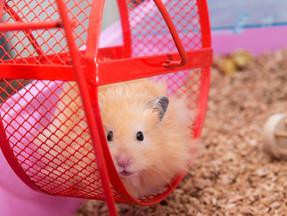 Like a hamster on a wheel...