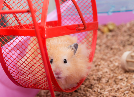 The Hamster Wheel You Want to Ride on the Change Curve of Life