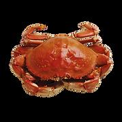 crab-332103_1920.png