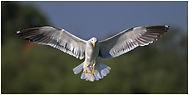 bird-35.jpg