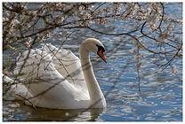 swan_flowers.jpg