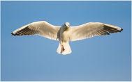 bird-172.jpg