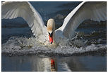 bird-103-Edit.jpg