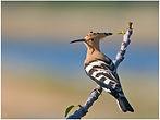 bird-14.jpg