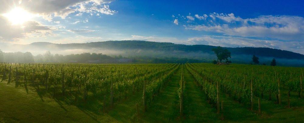 Alba+Vineyard+&+Winery+sunrise