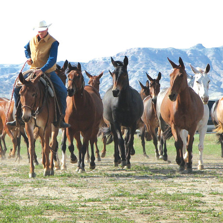 Jake Clark's Mule Days