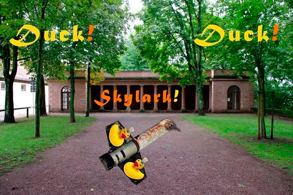 Duck Skylark Duck
