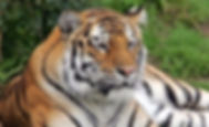 8 Days Rajasthan Wildlife Tour by Lemon Holidays