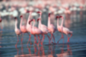 Bharatpur Bird Park Tour by Lemon Holidays