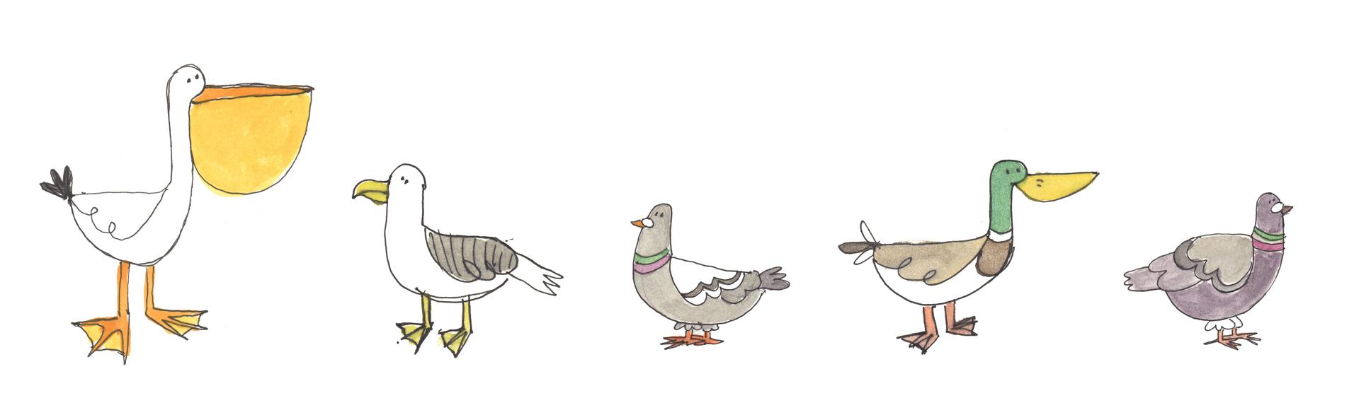 Birds- personal