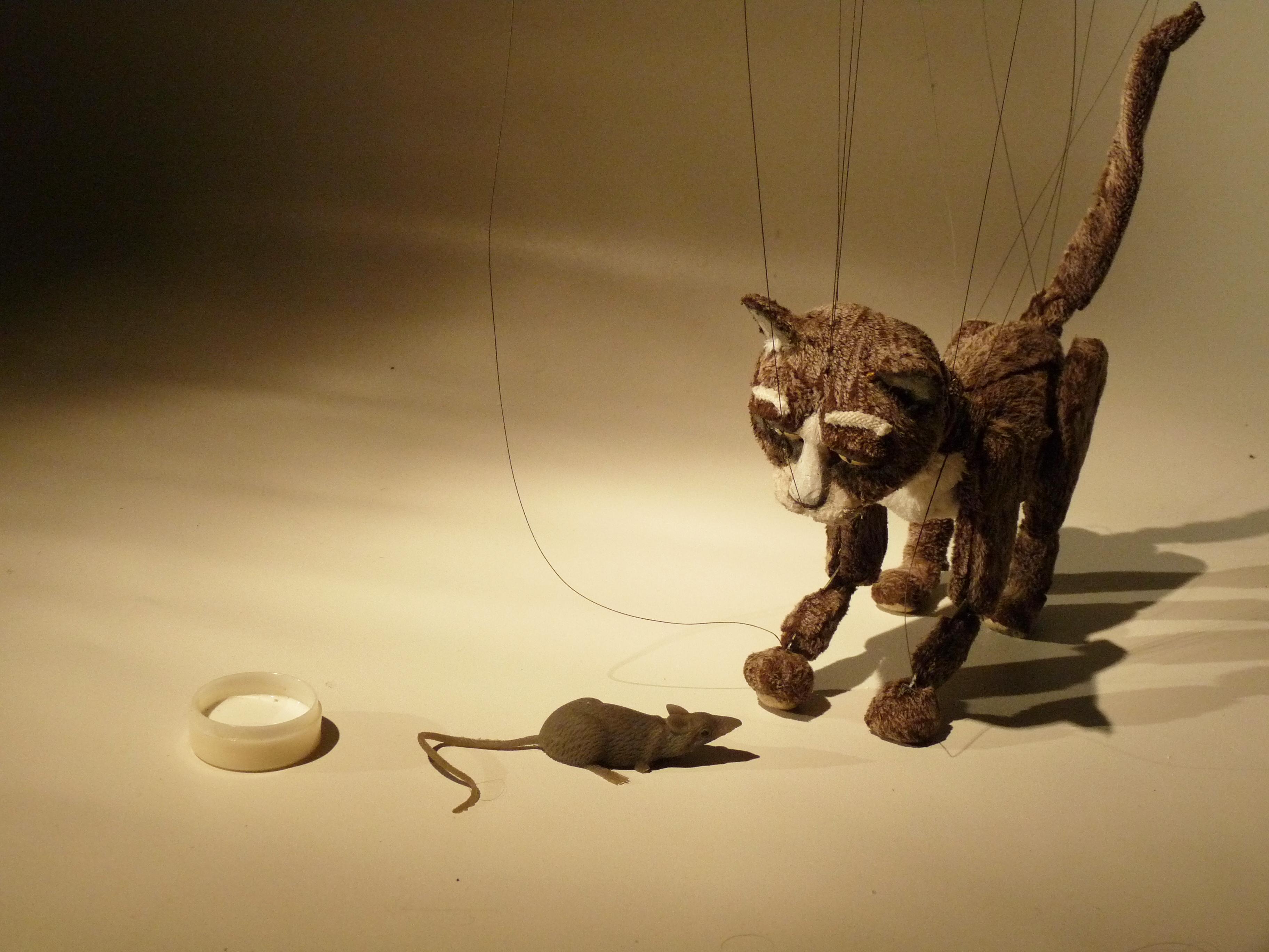 gato rata