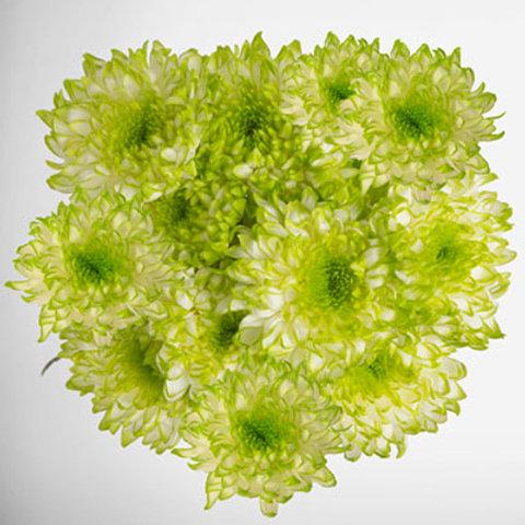 Lime green zembla