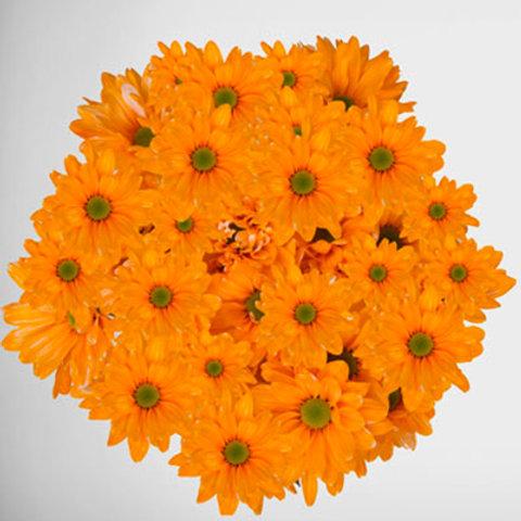 Tinted Orange Pastel