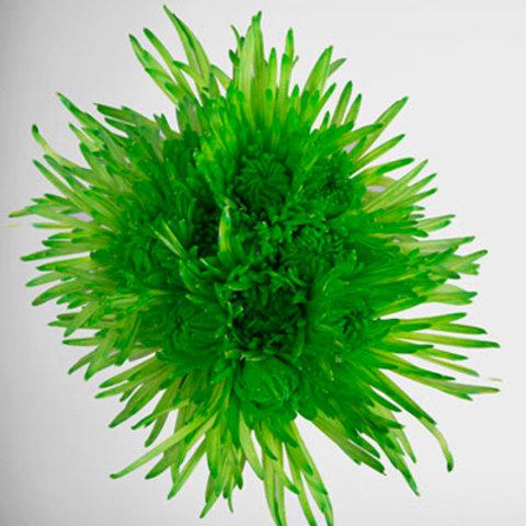 Tinted Delistar Green