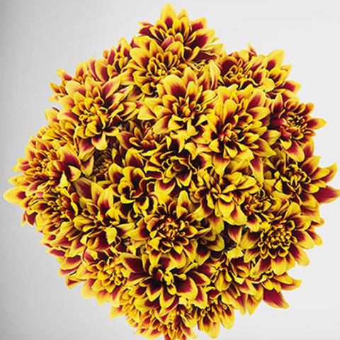 Orinoco Yellow
