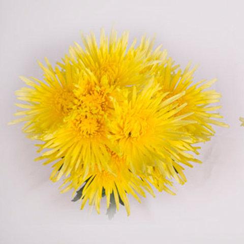 Delistar Yellow