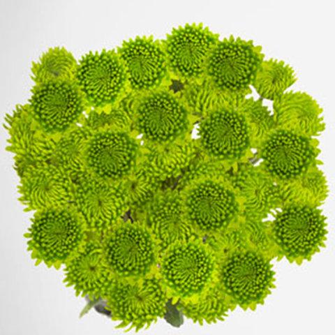 Green Yoko Ono