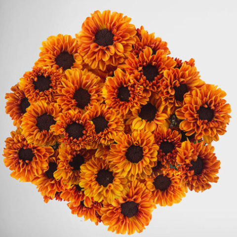 Orange Tedcha