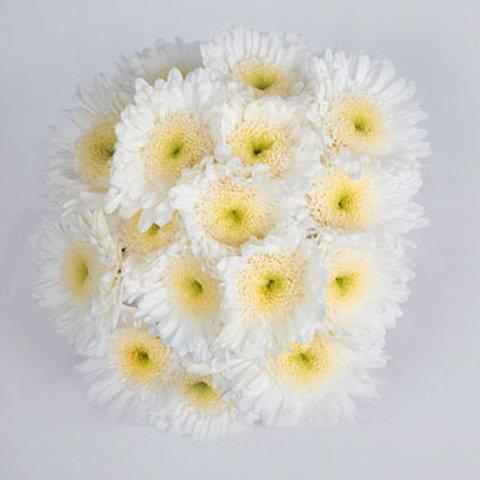 White Eleonora