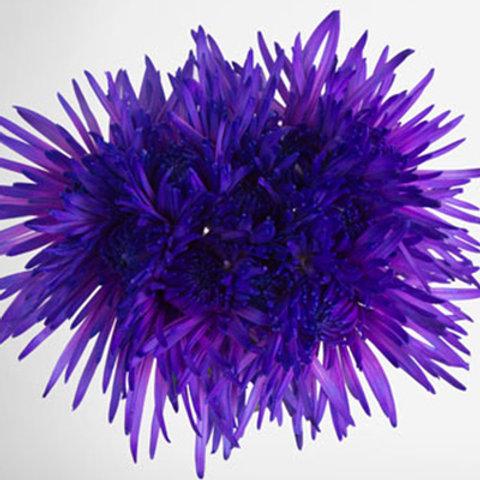 Tinted Delistar Purple