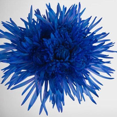 Tinted Delistar Blue