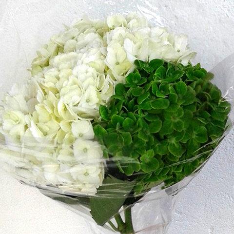 White Green cb3