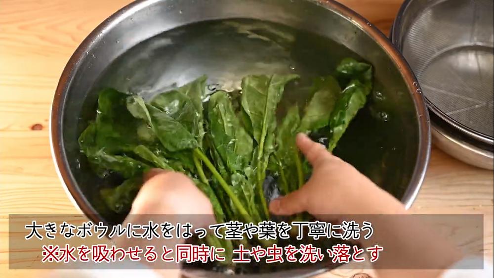 葉物野菜 非結球性葉菜類