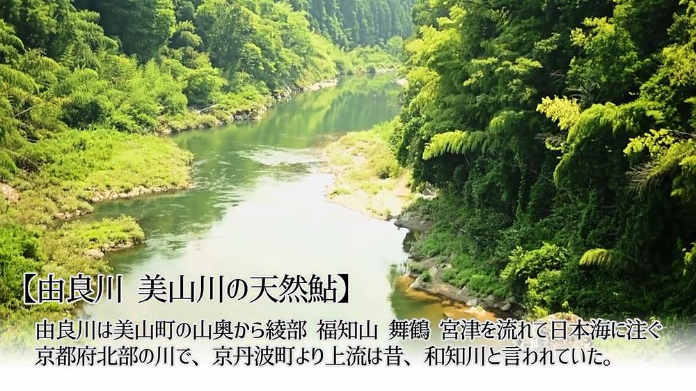 由良川 美山川の天然鮎