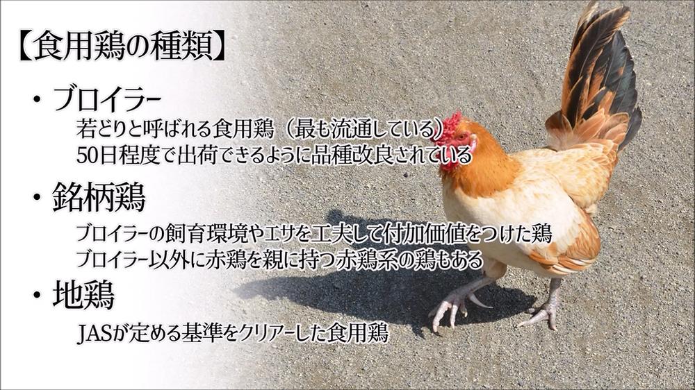 「ブロイラー」  「銘柄鶏」  「地鶏」とは?