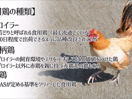 鶏肉 鴨肉 地鶏の基準と若鶏について
