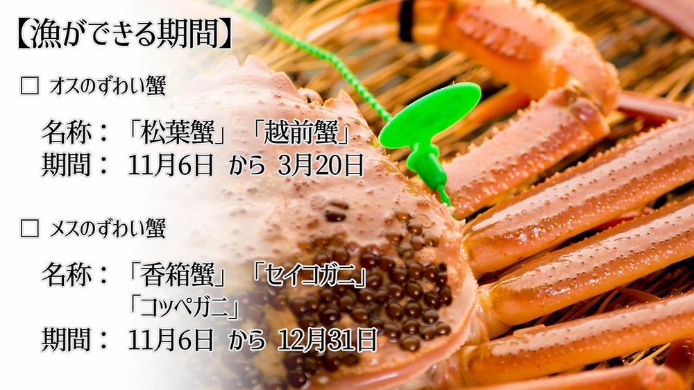 香箱蟹 セイコガニ コッペガニ