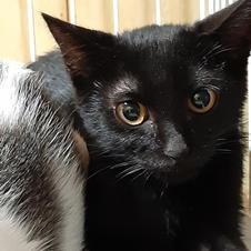 綺麗な黒猫姉さん