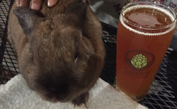 The rabbit, the legend, Prince Ganon