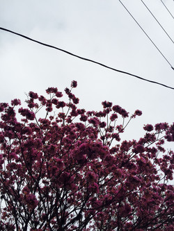 #prettytree